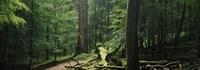 Het Zoniënwoud